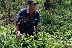 Đắk Nông: Công ty gia đình cựu PGĐ CA tỉnh dính lùm xùm bán đất rừng trái phép