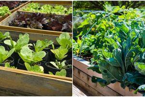 'Đóng giường' trồng rau cho không gian sân vườn thêm độc đáo