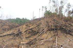 Quảng Ngãi ngăn chặn tình trạng phá rừng tự nhiên để trồng rừng