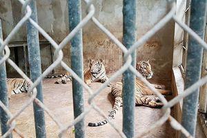 Tận mắt xem động vật hoang dã ở nơi nhiều hơn Vườn thú Hà Nội