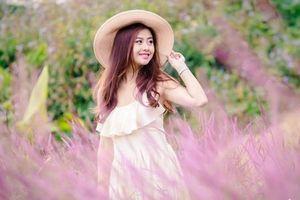 Du lịch lễ hội cỏ hồng ở Đà Lạt với 3 triệu đồng?