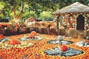 Ngôi làng kì lạ được làm từ 90.000 quả bí ngô