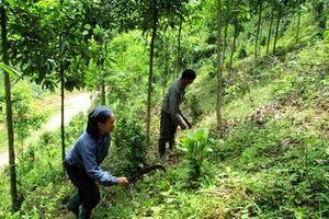 Người dân sẽ được hưởng lợi từ chính sách phát triển kinh tế rừng