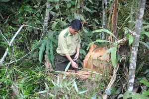 Thực hư việc phá rừng phòng hộ đầu nguồn ở Lào Cai?
