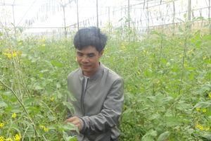 Có một trang trại trại rau hữu cơ khép kín từ A - Z, doanh thu 400 - 500 triệu/tháng