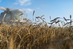 Nga chiếm lĩnh thị trường lúa mì tại Mỹ bất chấp lệnh trừng phạt