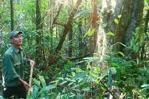 Người canh rừng Cà Nhông