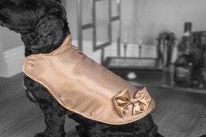 Độc đáo áo khoác cho chó đắt nhất thế giới