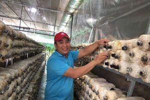 Chàng trai biến mảnh đất phèn thành trại trồng nấm