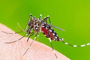 Vì sao một vài người lại bị muỗi đốt nhiều hơn người khác?