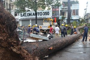 Hàng trăm cây xanh ngã đổ, khuyến cáo người dân không đứng dưới cây khi mưa, giông