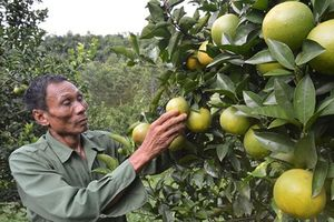 Lão nông đạt doanh thu nửa tỷ từ mô hình kinh tế tổng hợp