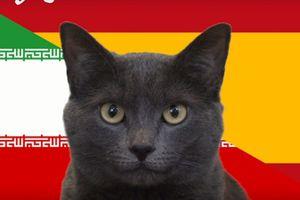 Tây Ban Nha đón tin vui từ 'tiên tri' mèo đen