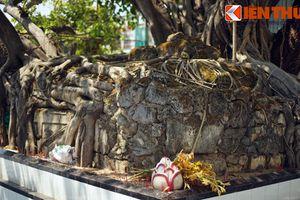 Mộ Tướng Quân cực bí ẩn bên đường quốc lộ ở Cam Ranh
