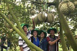 Phân bón Phú Mỹ giúp người trồng sầu riêng Khánh Sơn thu về tiền tỉ