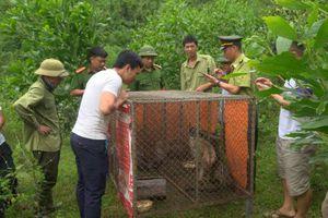 Hà Tĩnh: Thả 4 cá thể động vật hoang dã về môi trường tự nhiên
