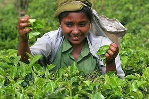 Sri Lanka dùng trà trừ nợ mua dầu Iran?