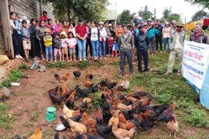 Đắk Nông: Mong nuôi gà thả vườn sử dụng đệm lót sinh học nhân rộng