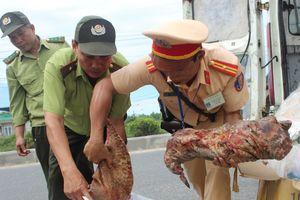 Phát hiện ôtô chở thịt động vật hoang dã trái phép ở Quảng Nam