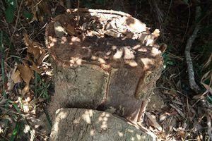 Gia Lai: Siết chặt quản lý bảo vệ rừng