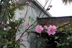 Thú vị 'hoa' và 'nụ' trong tiếng Việt
