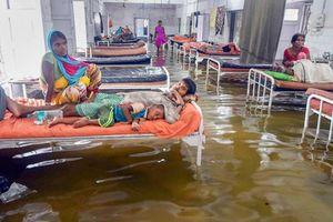 Mưa lớn làm nước ngập lênh láng, cá bơi tràn cả vào bệnh viện