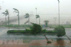 Tháng 8 có thể sẽ xuất hiện 1-2 cơn bão ảnh hưởng đến đất liền