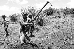 Nam Phi cải cách điền địa: Trưng thu, chia cho người không đất