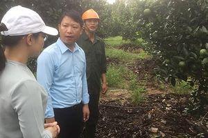 Vườn mẫu Thượng Lộc và kinh nghiệm Hà Tĩnh
