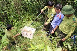 Tái thả 20 cá thể rắn về môi trường tự nhiên