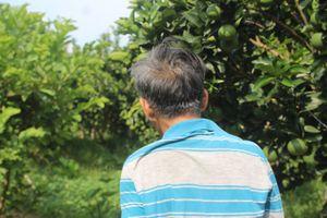 Cam xoàn: Trái ngọt của người dân vùng sông nước miền Tây