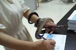 Bị rắn cắn, cô gái vô tư bắt rắn mang tới bệnh viện