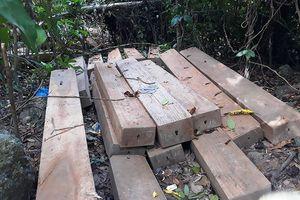 Bình Định: Chủ tịch tỉnh chỉ đạo công an vào cuộc vụ 23 'cụ dổi' bị đốn hạ