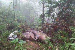 Hà Giang: Sau trận mưa lớn, phát hiện 8 con trâu bị sét đánh chết