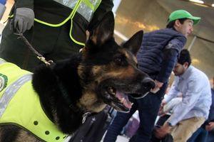 Chú chó bị băng đảng ma túy treo thưởng 70.000 USD
