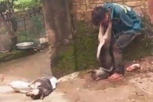 Kẻ trộm bị người dân treo chó vào cổ
