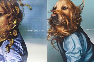 Chó hóa trang thành nữ hoàng nhạc Pop Madonna ấn tượng