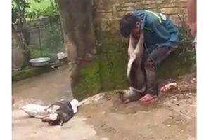 Trộm chó bị người dân bắt trói, đánh đập và treo chó lên cổ