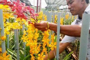 TP.Hồ Chí Minh sắp có lễ hội hoa lan, cây kiểng đầu tiên