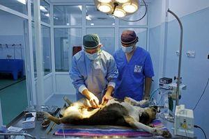 Khi động vật hoang dã phải vào bệnh viện?