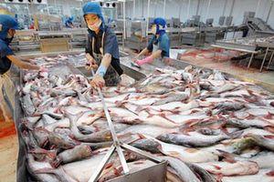 Trung Quốc giảm thu mua, giá cá tra tụt mạnh