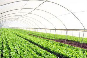 'Đặt hàng' cho nông nghiệp