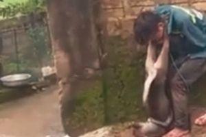 Thanh Hóa: 'Cẩu tặc' bị người dân đánh trói, treo chó vào cổ