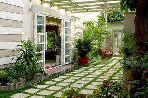 Bí quyết trồng cây trong nhà không lo ẩm thấp, muỗi và côn trùng