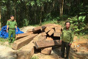 Quảng Nam: Phát hiện số lượng lớn gỗ rừng tự nhiên trong rừng trồng