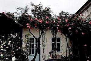 Ông bố trẻ Hưng Yên tặng vợ con ngôi nhà tràn ngập hoa hồng