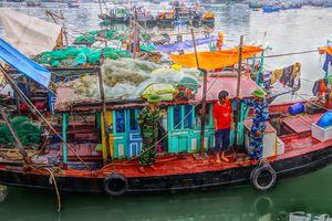 Tạm giữ tàu khai thác hải sản trái phép trên vùng biển Quảng Ninh