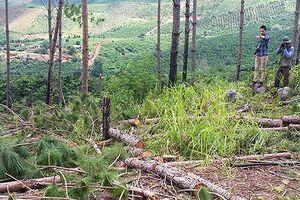 Buộc doanh nghiệp bồi thường 219 tỉ đồng vì để mất rừng