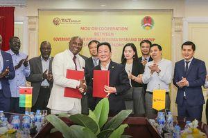 T&T Group dự kiến thu mua toàn bộ sản lượng hạt điều thô của Guinea Bissau