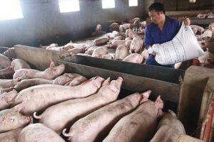 Sớm bình ổn mặt hàng thịt lợn